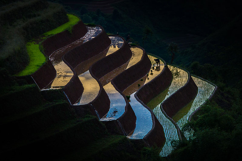 Vietnamese terraced rice fields